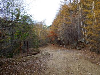 金峰山荘からのアプローチ林道.jpg